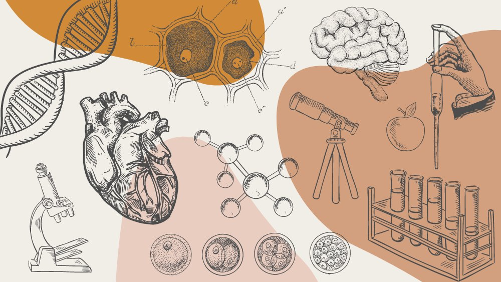 Collage of scientific illustrations on a neutral tone background. Images include DNA strand, anatomical heart, microscope, molecule, plant cell, dividing cells, telescope, brain, apple, test tube set and hand holding pipette