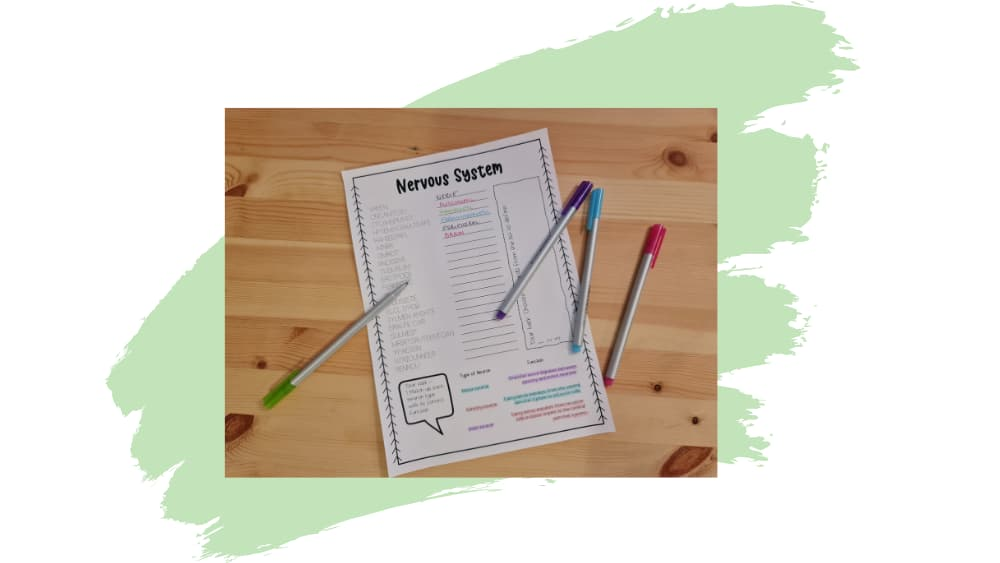 Image of nervous system word scramble worksheet partially completed on green paintbrush stroke background